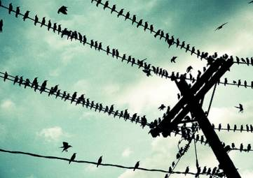 Птичий помёт лишил часть Коктебеля электричества