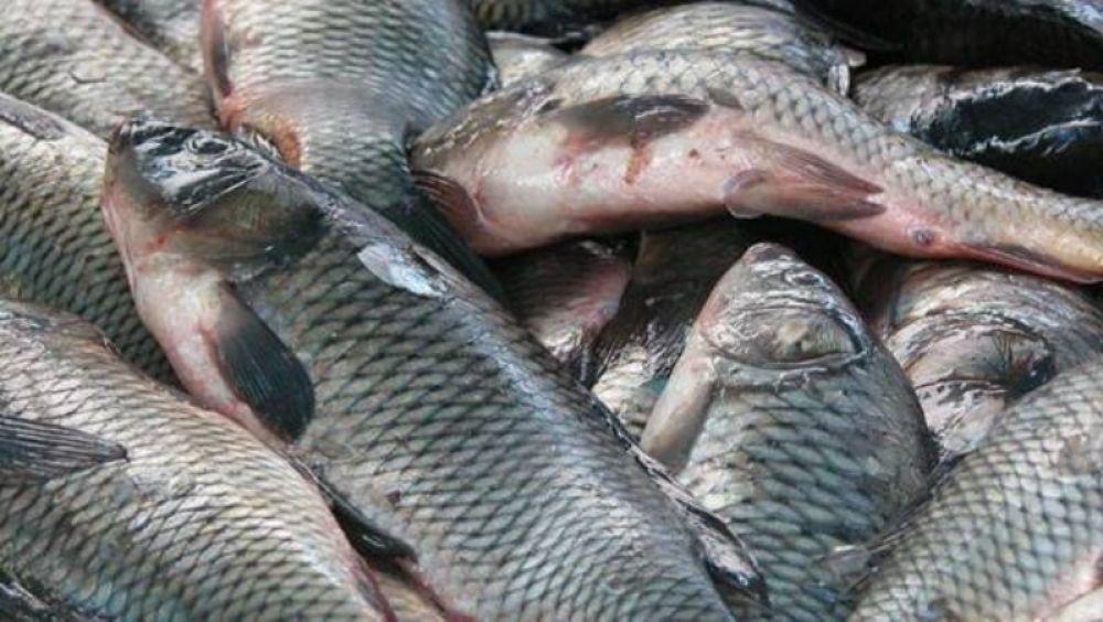 На рынке в Феодосии продавали рыбу без маркировки и установленных сроков годности