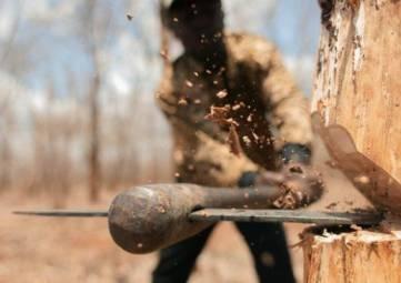 Прокуратура выявила факт незаконной рубки деревьев в Керчи