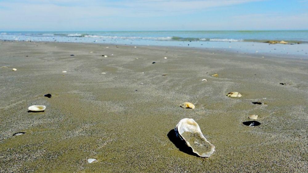 Арендаторы пляжей могут оформлять договоры водопользования без аукциона