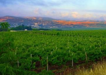 Бум промышленного садоводства и виноградарства назревает в Крыму