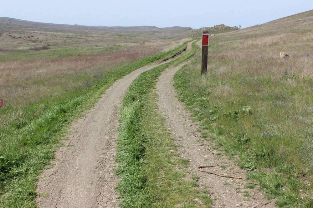 Внимание! Дорогу переходят безногие ящерицы