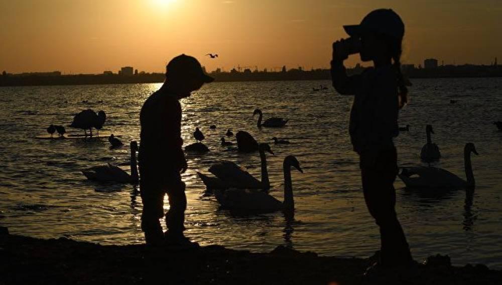 Фотофакт: лебеди в лучах заходящего солнца в Крыму