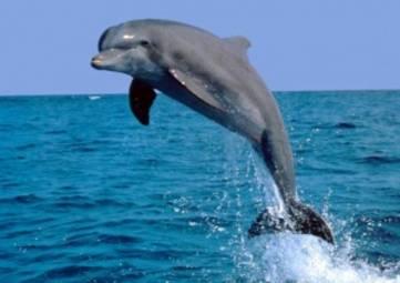 Севастопольские ученые предлагают ограничения для рыбаков из-за гибели дельфинов в сетях
