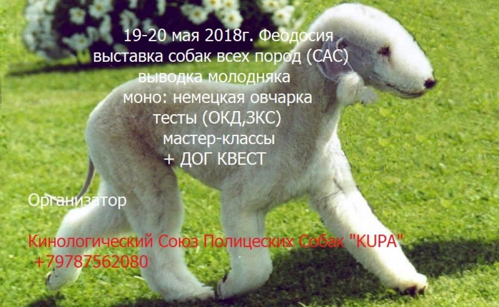 В Феодосии состоится выставка собак (дополнено)