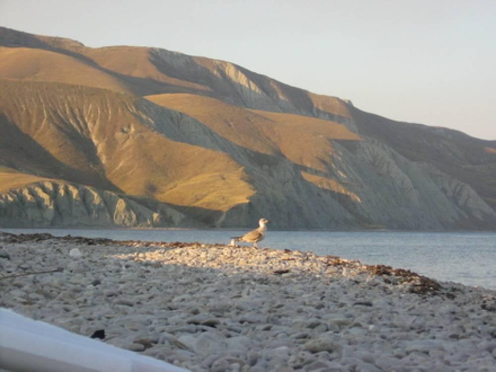 В Двуякорной бухте вполне уживутся предприятия оборонки, рыбной промышленности и туристический комплекс – глава администрации Феодосии