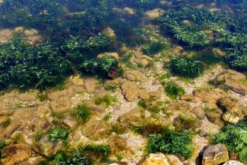 Электрический пришелец в Черном море