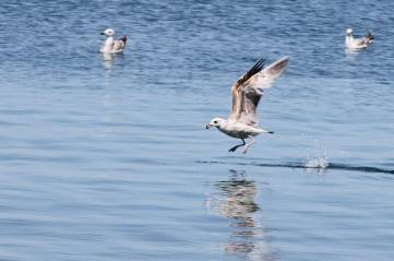 Пернатые на Черном море