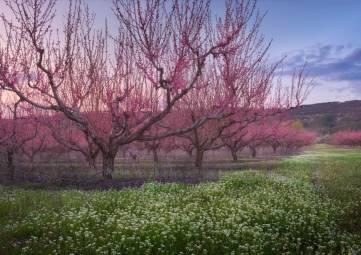 Крымские аграрии получат 850 млн рублей на закладку новых садов в этом году