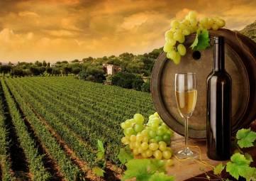 Гимн в честь крымских виноделов появится в этом году