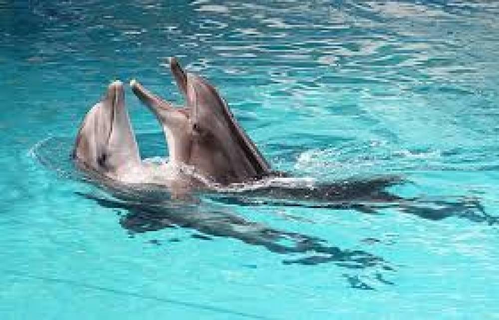 Владелец ялтинского дельфинария заплатит очередной штраф за неисполнение предписаний Госкомрегистра