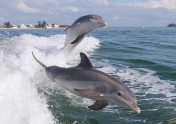 Помощь дельфинам