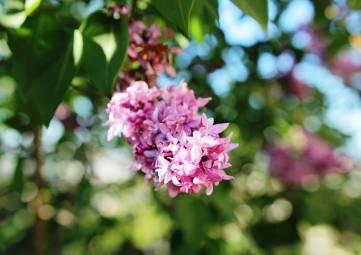Цветы этого дня