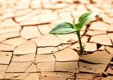 Ущерб от засухи в Крыму составил более одного миллиарда рублей – Аксёнов