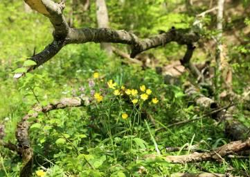 Немного лесной прохлады