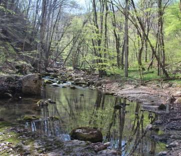 В лесу у костра