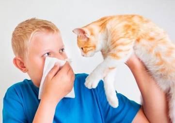 Российские ученые разрабатывают первую вакцину против аллергии на кошек