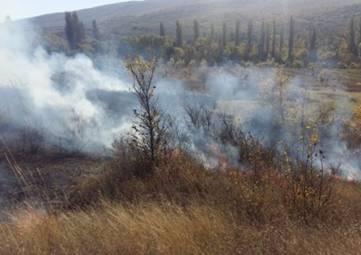 Пожарные ликвидировали в Крыму полсотни очагов возгораний сухой травы за сутки