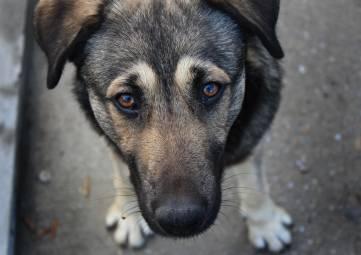 Житель Алушты может лишиться свободы на пять лет за убийство собаки