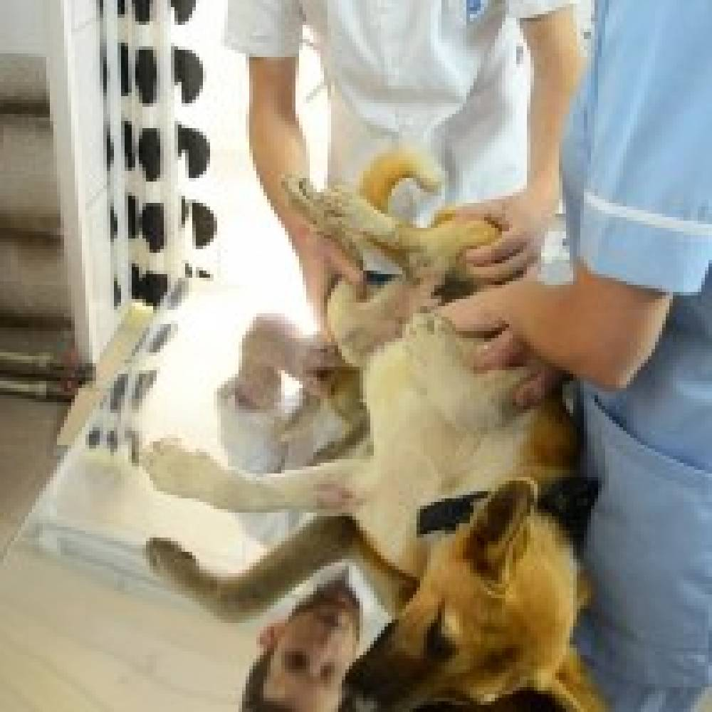 В Феодосии стартовала компания стерилизации бездомных животных