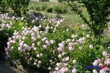В Крыму - цветочный бум!