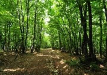 Крымчанка потеряла в лесу пьяного мужа