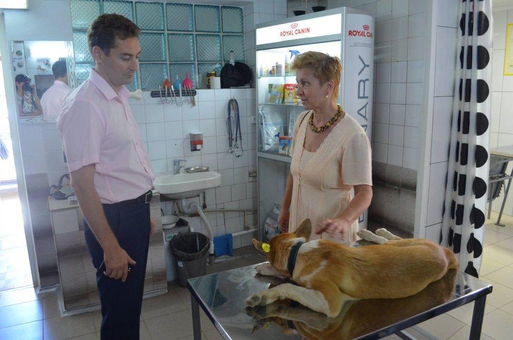 В Феодосии начали отмечать бирками стерилизованных собак.