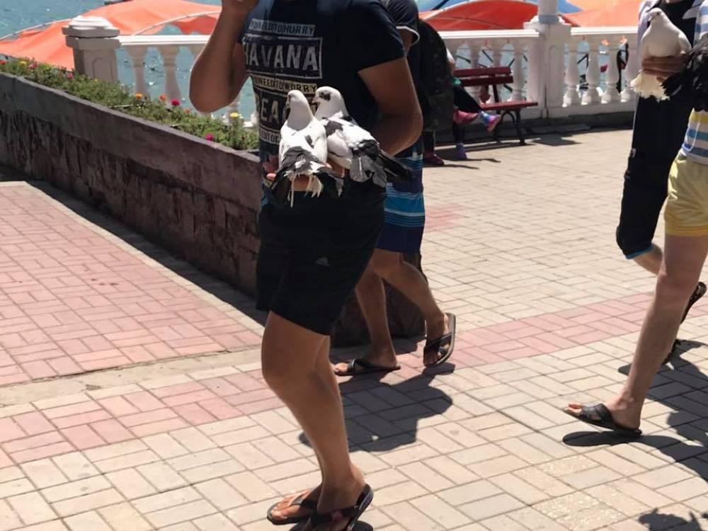 В Коктебеле издеваются над животными
