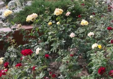 Набережная Феодосии в цветах