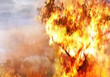 Запрет на костры и фейерверки: в Крыму объявили о чрезвычайной пожарной опасности