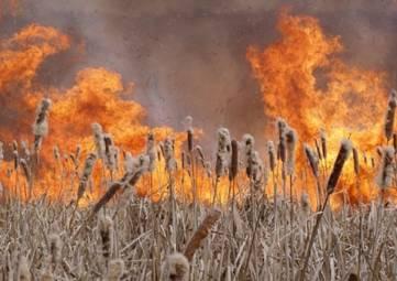 Пожар в Ближних Камышах