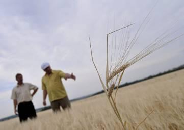 Еще в двух районах Крыма ввели режим ЧС из-за засухи