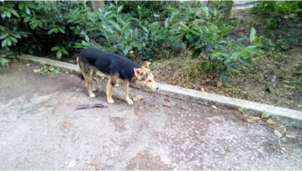 В Алуште спасли упавшую в яму собаку