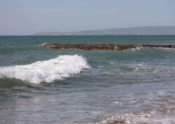 В Феодосии хотят перерабатывать дары моря
