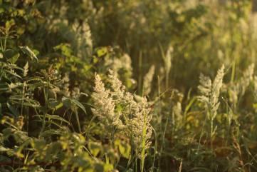 Трава у дома