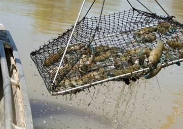 В Крыму снят сезонный запрет на лов раков