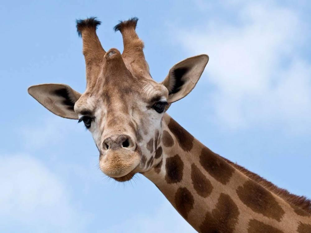 Познавательные факты о диких животных