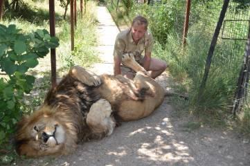 В тандеме с хищником