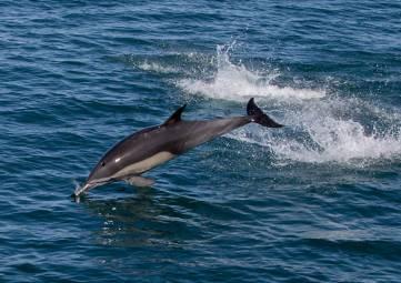 Крымчане за полгода сообщили о 217 случаях обнаружения мертвых дельфинов