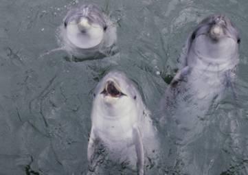 Ученые заявили о преднамеренных случаях убийства дельфинов в Крыму
