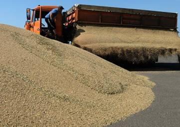Минсельхоз РК рекомендовал аграриям выбирать крымские семена для озимых