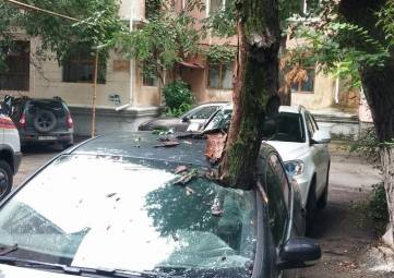В Феодосии дерево пробило автомобиль