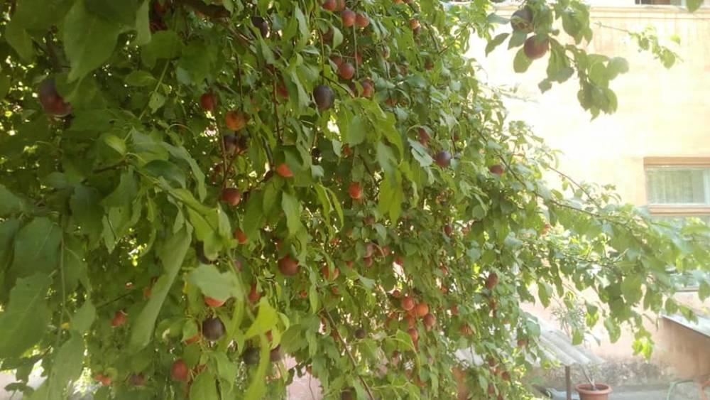 В саду библиотеки поспел урожай