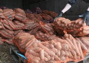 Крымские аграрии собрали 20 тысяч тонн овощей
