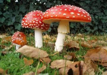 В походе отравились грибами