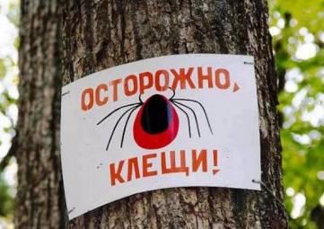 Клещи продолжают кусать крымчан и отдыхающих