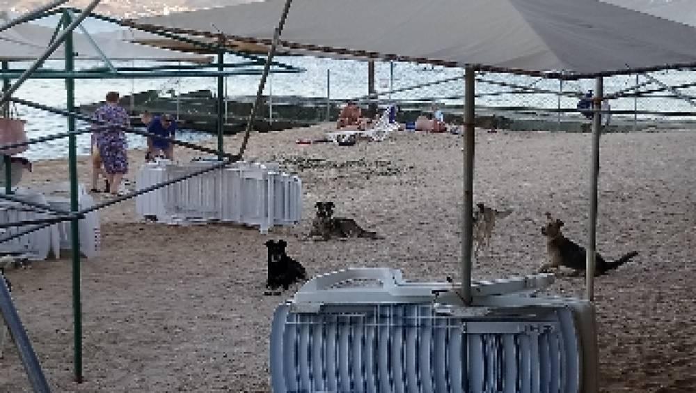 Морские собачки