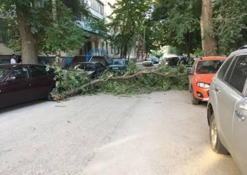 В центре Феодосии завалилось дерево
