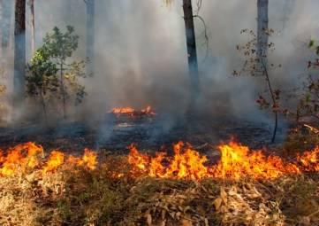 Очередное возгорание зафиксировано в горах над Ялтой