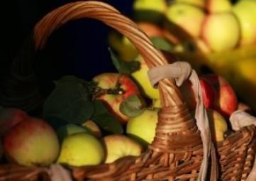 Рекордный за 10 лет урожай яблок ожидают в Крыму